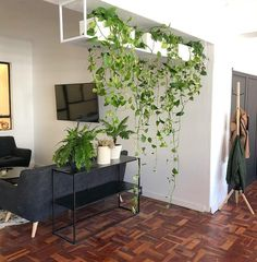 40 creative and fresh plant decoration ideas # fresh decorations … – House Plants Decoration Plante, House Plants Decor, Plant Wall, Indoor Plants, Indoor Climbing Plants, Indoor Plant Decor, Hanging Plants, Indoor Garden, Home And Living