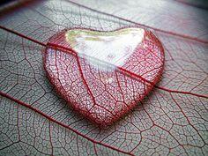 drop heart