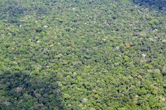 Aerial view of the Amazon rainforest, near Manaus, the capital of the Brazilian state of Amazonas. Brazil.  Photo by Neil Palmer/CIAT for Center for International Forestry Research (CIFOR). www.cifor.org  19. April 2011