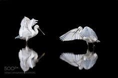 You and me by RonchiStefano #animals #animal #pet #pets #animales #animallovers #photooftheday #amazing #picoftheday