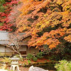 #南禅寺 #永観堂 #京都 #紅葉 #kyoto