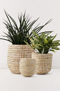 plant basket Rattan Planters, Basket Planters, Indoor Planters, Diy Planters, Hanging Planters, Wicker Baskets, Planter Pots, Tall Planters, Succulent Planters