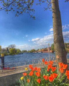 """Havelberg Sachsen-Anhalt #iphone6sphotography #havel #river #riverside #sachsenanhalt #havelberg #april2016 #clouds #cloudporn #cloudlovers #skyporn #skylovers #boote #flowers #blütenpracht #landscape #landschaft #ig_germany #loves_united_germany #tree #treeporn #like4like #beautiful #follow #cool by molto_11 Follow """"DIY iPhone 6/ 6S Cases/ Covers/ Sleeves"""" board on @cutephonecases http://ift.tt/1OCqEuZ to see more ways to add text add #Photography #Photographer #Photo #Photos #Picture…"""