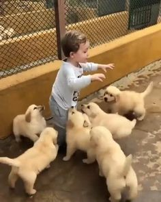 Cute Baby Dogs, Super Cute Puppies, Baby Animals Super Cute, Cute Dogs And Puppies, Cute Little Animals, Baby Cats, Cute Funny Baby Videos, Cute Funny Dogs, Cute Animal Videos