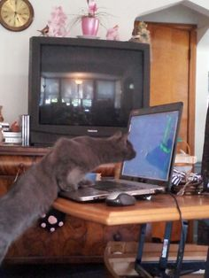 Puff playing world of warcraft cute cats. Wonder what his dps is like. Lol