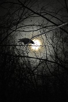 Raven in a dark forest with a moon that hardly lit up. Wallpeper Tumblr, Quoth The Raven, Raven Art, Crow Art, Crows Ravens, Foto Art, Oeuvre D'art, Night Skies, Dark Art