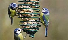 How to make fat cakes for birds - Projects: Wildlife gardening - gardenersworld.com