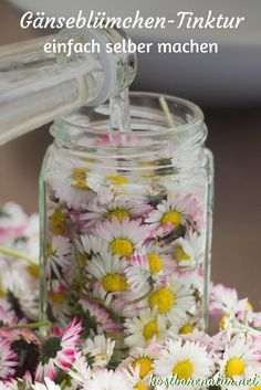 Daisy tincture - for acne, blackheads and blemished skin .- Gänseblümchen-Tinktur – gegen Akne, Mitesser und unreine Haut – Kostbare Natur The daisy contains many valuable ingredients that you can preserve in a tincture and use all year round. Diy Beauté, Natural Cosmetics, Herbalism, Beauty Makeup, Beauty Hacks, Beauty Tips, Beauty Care, Beauty Products, Daisy