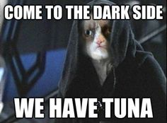 Star Wars Grumpy Cat. Yes, we have tuna in our kitchen.