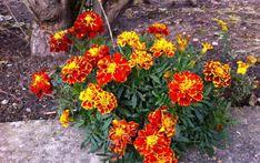 Life Is Good, Detox, Herbalism, Diy And Crafts, Korn, Health Fitness, Bloom, Healing, Gardening