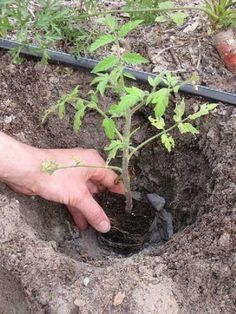 Így használd a hamut a kertben, meghálálják a növényeid 3