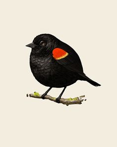 Fat Birds by Mike Mitchell. I need!