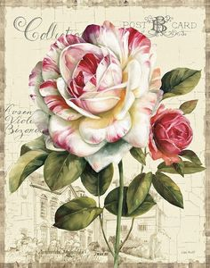 Rose postcard - fave
