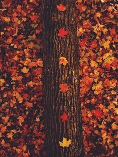 Ghost Pictures, Fall Pictures, Ghost Pics, Tumblr Colors, Fall Backrounds, Autumn Phone Wallpaper, Autumn Tumblr, Sky Aesthetic, Autumn Garden