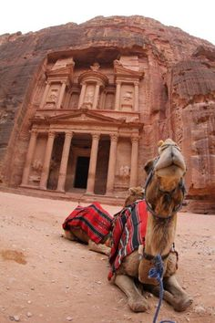#petra jordania