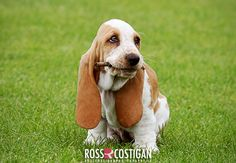 I used to have a Basset Hound. They're so sweet!