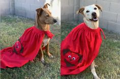 Superhero Animal Services is here to the rescue for all your Pet Sitting needs in Gilbert and surrounding cities.