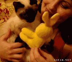 Love at first sight. | 25 Animal GIFs That Will Warm Your Cold, Dead Heart