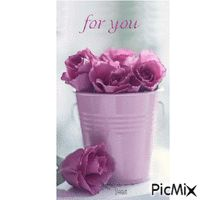 Rose Roses, Pink, Rose, Pink Roses