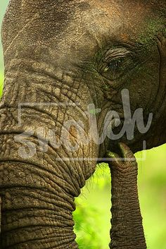 Elephant close-up Animal Photography, Close Up, Elephant, Pets, Animals, Animales, Nature Photography, Animaux, Animal Pictures
