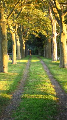 Drive | Allee | Landscape Architecture | Formal | Trees | Residential