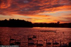 Shepherd's warning? Swans enjoy the sunrise at Hogganfield Loch, although Scotland was set for chilly temperatures and rain