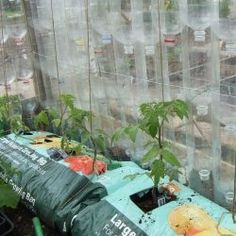How To: Build a greenhouse using old plastic bottles Plastic Bottle Greenhouse, Plastic Bottles, Soda Bottles, Backyard Buildings, Build A Greenhouse, Old Fences, Types Of Houses, Hydroponics, Organic Gardening