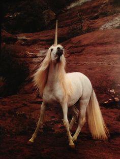 Nentikobe! (Unicorn) Robert Vavra
