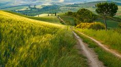 ***Tuscany backroad (Italy) by Simon Byrne cr. Road Painting, Where Did It Go, Natures Path, The Road Not Taken, Cool Photos, Amazing Photos, Country Landscaping, Medieval Town, Art World