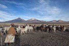 6:00 am, in the Sajama Park, Bolivian Altiplano, an Aymara woman breeder take care of her llamas