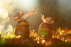 Snails in rain. - Imgur