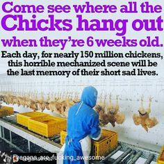 why finance animal cruelty? Evolution, How To Become Vegan, Animal Agriculture, Stop Animal Cruelty, Animal Testing, Factory Farming, Why Vegan, Vegan Animals, Sad Life