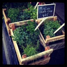 herb boxes -sell assorted herb plants early spring  I like these boxes