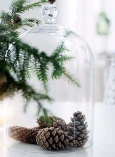 Christmas Tablescape Inspiration pine cones in a cloche Natural Christmas, Noel Christmas, Green Christmas, Little Christmas, Rustic Christmas, Winter Christmas, All Things Christmas, Minimal Christmas, Frugal Christmas