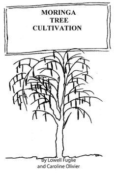 Moringa Oleifera: How to Plant, Grow, Cultivate Moringa Trees