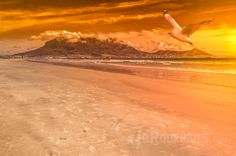 Table Mountain, Cape Town at Sunset with a Seagull in the foreground. Table Mountain, Cape Town, Digital Art, Fantasy, Wall Art, Sunset, Outdoor, Beauty, Outdoors