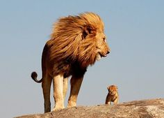 ~| undeniably the most majestic and beautiful animal |~