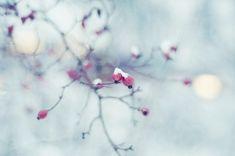 Зима уже практически вступила в свои владения, настало время белой королевы, покровительницы ледяных ветров, хозяйки спящего королевства. Зима, это не только мороз, снег, лед и прочие не совсем комфортные природные явления для человека,это еще и своя особенная красота.