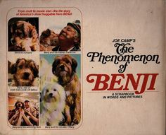 The Phenomenon of Benji Written by Frank Inn Illustrated by Photographic Illustrations Bantam Books, 1977 44 Pp. 0553160389 Softcover The life story of Americas most huggable hero, as told by his trainer. TBH, his real life story is even more heart-warming than his popular movies. In good condition with wear to the cover, yellowed pages, a name on inside front cover, and some water staining on the bottom corners of the pages. Inventory# 70064