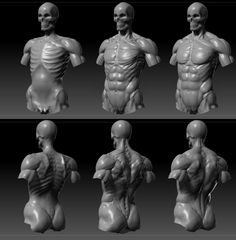 실사 느낌 - 뼈 + 근육 + 지방 + 피부 주름 + 핏줄 표현 Human Anatomy For Artists, Human Anatomy Art, 3d Anatomy, Anatomy Sketches, Anatomy Poses, Muscle Anatomy, Anatomy Study, Anatomy Drawing, Human Figure Drawing