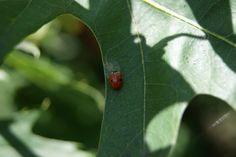 nature - a ladybird