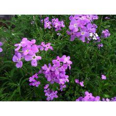 Ohio wildflower sleeve idea