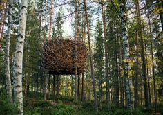 Tree Hotel Sweden: The Bird's Nest