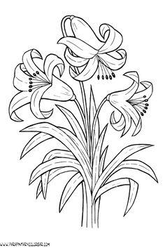 dibujos-para-colorear-de-lirios-009