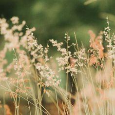Llevo varios meses preparando algo que me hace tremenda ilusión mostraros. En pocos días saldrá a la luz. Mientras tanto estoy de los nervios! Por suerte tener la naturaleza cerca me relaja me hace cosquillas en la palma de la mano me acaricia la mejilla y me alegra el corazón. Cuánto ayuda tener verde cerca. No renunciaría a eso ni por todo el oro del mundo Por desgracia hay otros que se dedican a destruir todo eso que yo (y otros tantos muchos) aman. Confiemos en que el karma se encargará…
