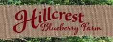 Hillcrest Blueberry Farm, Gloster, Louisiana. Blueberry picking farm. Visit upickfarmlocator.com to find more U-Pick Farms near you. #blueberrypicking #freshblueberries #gopicking #glosterlouisiana