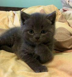 The Thinking Kitty