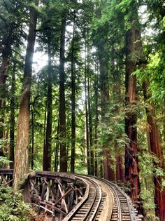 Henry Cowell Redwoods State Park, Felton, California — by YoungAdventuress Best Places To Camp, Places To Travel, Places To Go, Carlson Young, Abandoned Train Station, Pacific Coast Highway, Highway Road, Carmel By The Sea, California Travel