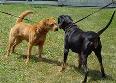 Shelter Resources - Behavior Assessment of Shelter Animals