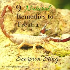 natural remedies to treat a scorpion sting
